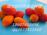 原產地直銷當今端的蜜果品種 紅蜜果 紅參果種子種苗10粒/袋
