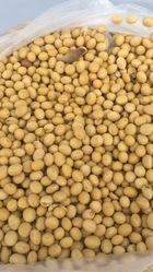 供應優質黃豆蛋白豆芽豆原產地專業代購代發貨代請車皮專注服務