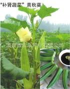 批发供应黄秋葵 红秋葵 羊角豆 各种蔬菜种子 四季菜园种植pz