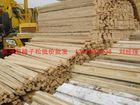 供應樟子松板材
