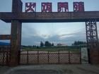 创业好项目--火鸡养殖内蒙古通辽火鸡养殖基地