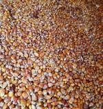 佳木斯富錦烘干玉米銷售 優質黃玉米玉米粒