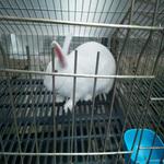 供兰州幼兔和甘肃小兔批发