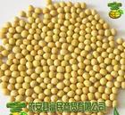 東北產黃豆多種品質和級別商品豆食品豆非轉基因大豆