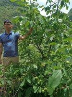 淄博冠核农业开发有限公司-冠核一号适合的栽种季节