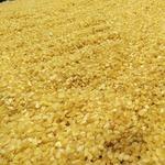 工厂直发 皂角米雪莲子 大籽无硫无糖无添加剂 生态 绿色