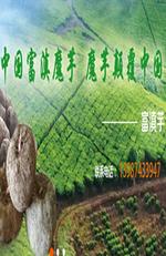 貴州魔芋種子報價商 貴州魔芋種子批發價格 貴州魔芋種子新報價 貴州魔芋種子廠家 魔芋種子一斤 貴州魔
