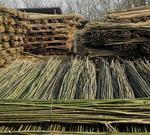 2米菜架竹 支幼苗等用  現貨批發2米菜架竹 支幼苗等用  現貨批發