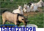 厂家直销内蒙古包头围栏网 网围栏 防护网