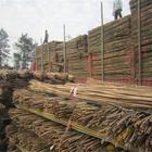 直销江西竹杆 大量批发2米5西红柿架杆