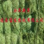 堿草 天然有機牛羊馬家畜政府采購扶貧公司專用飼草 牧草