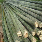 3米4米5米6米7米8米9米毛竹批发