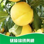 供應 黃桃 批發黃桃樹苗 優質 錦繡黃桃 樹苗種苗